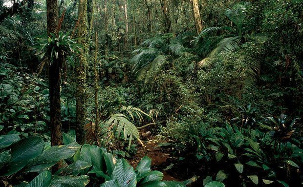 Brasil: Mata Atlântica / Atlantic Forest
