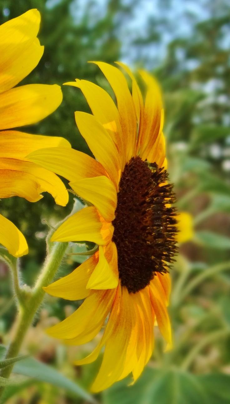 Summer Flowers by K. Mericle-Adkins