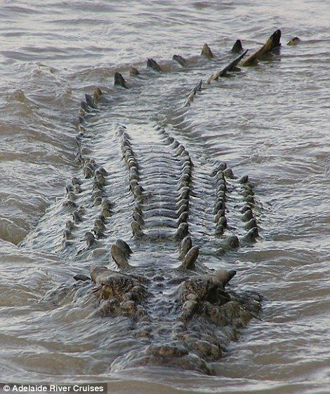 Brutus is one of the many saltwater crocodiles living in the Northern Territory, tourists ...