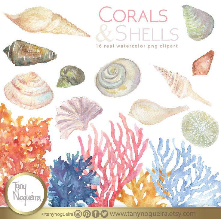 Sea party 🌊 ⛵️ 🌊 🐟 https://www.etsy.com/mx/listing/524337174/clip-art-conchas-de-mar-png-fondo #seaparty #beachhome #beachparty #seashells #watercolorshell #seashellart
