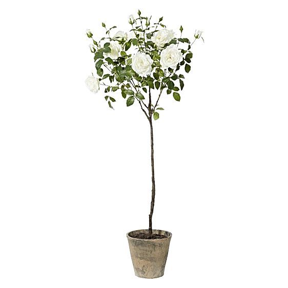 Artificial Potted Garden Rose Topiary by Rogue
