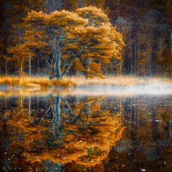 "theviewbeyondtheroom: "" Silent Waters by Oer-Wout """