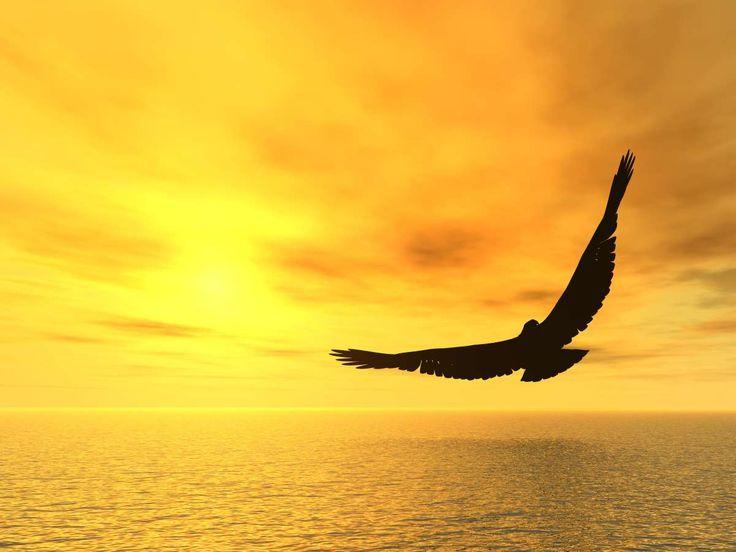 Πέτα σαν αετός με τα φτερά της αγάπης