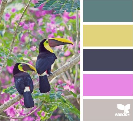 toucan colorColors Addict, Design Seeds, Yellow Bedrooms, Colleges Ideas, Colors Schemes, Bedrooms Decor, Gray Yellow, Bedrooms Ideas, Purple Gray