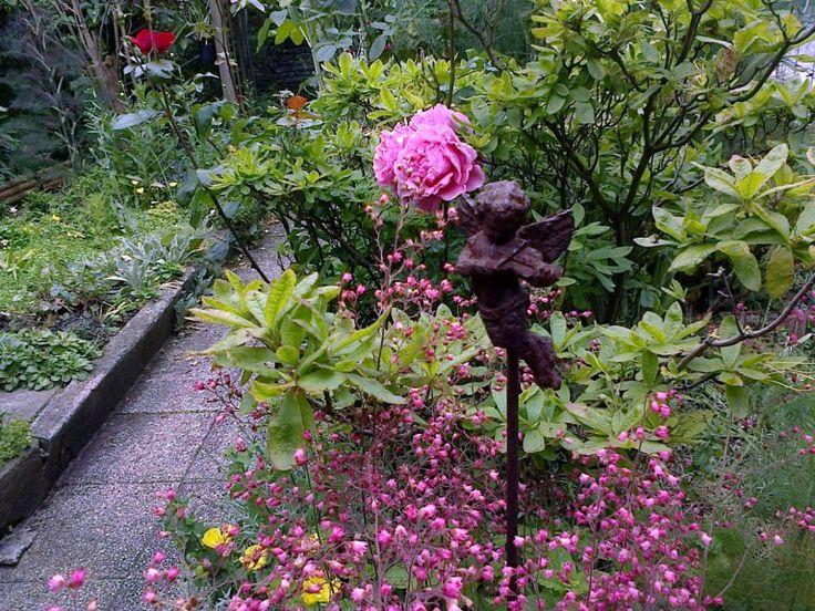 association rosier et plante vivace