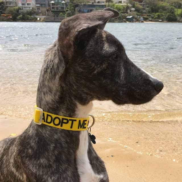 🌟 🌟 🌟 🌟 🌟 5 star review from Natalie M: Exactly what I wanted!  I bought an ADOPT ME collar and leash. Easy to order. Quick to arrive. Excellent quality. Non-scratchy for the dog. Nice and bright.  http://friendlydogcollars.com.au/products/adopt-me-lead-180cm-6ft-1