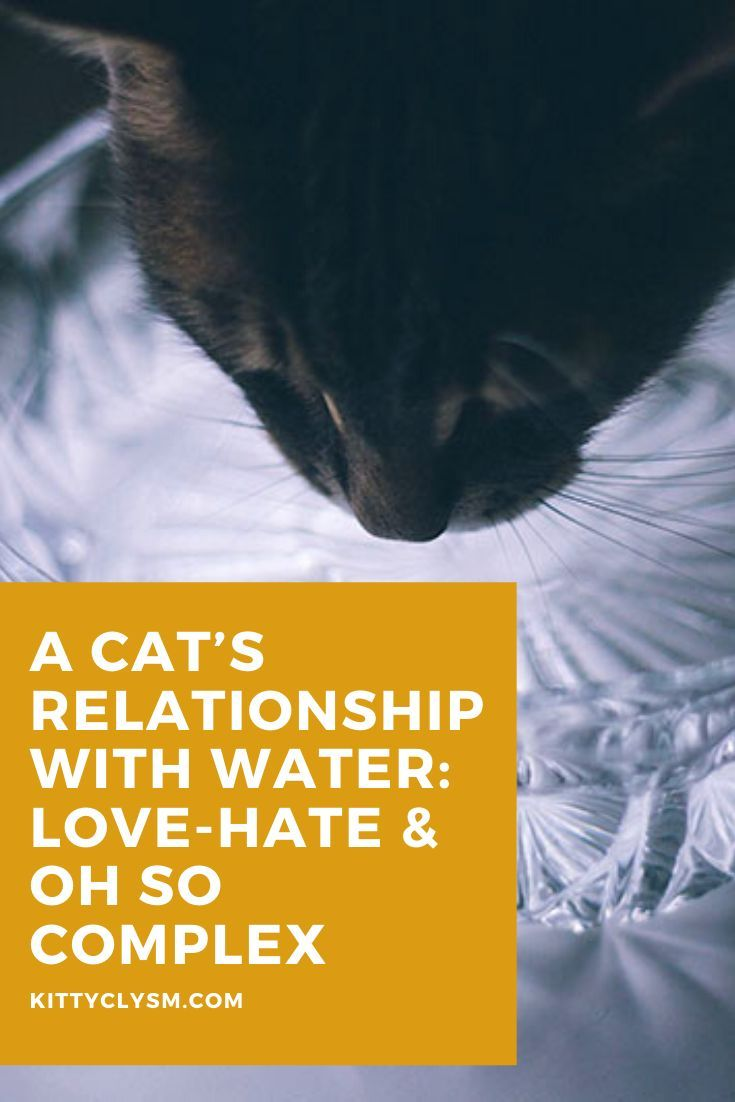 Pin On Cat Behavior Explained