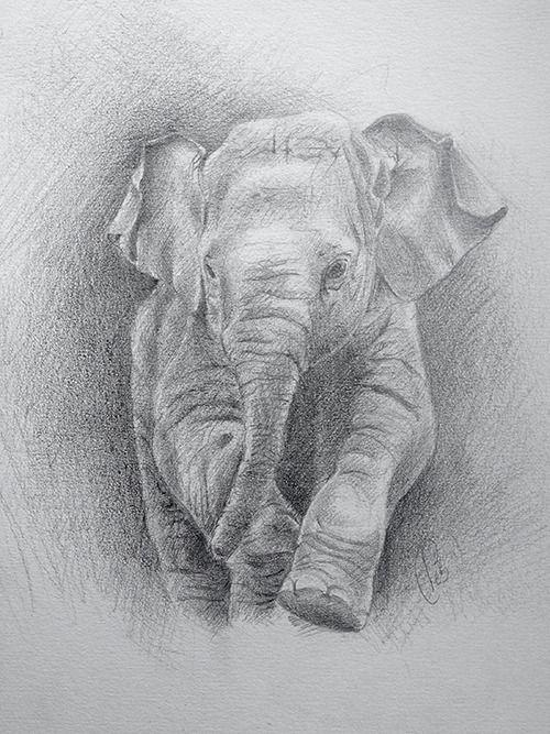 Elephanteau aux crayons sur papier 24x32cm
