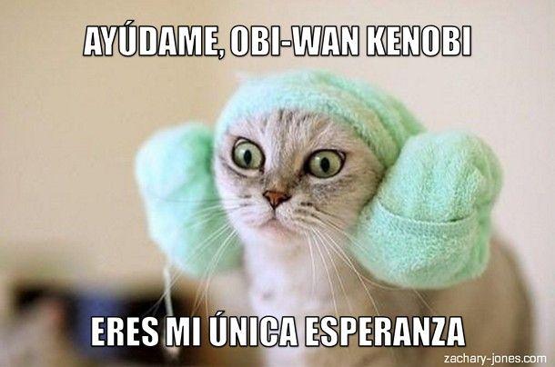Miáucoles: Lolcat en español: Ayúdame, Obi-Wan Kenobi #learn #spanish #jokes