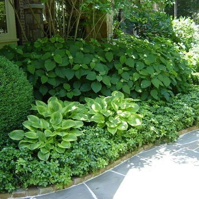 great use of boxwood, groundcover, hosta, hydrangea by lorie