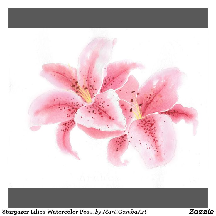 Stargazer Lilies Watercolor Poster   Zazzle