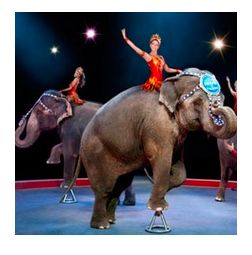 Summer Fun Discounts: Circus, Houston Roller Derby, Sugar Land Skeeters, HMNS, Comic Con & more http://www.houstononthecheap.com/half-price-houston
