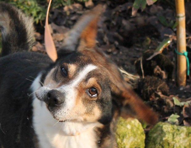 Rubber-face dog .FACCIA DI GOMMA!