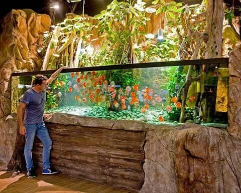 1850 gallons fish tank