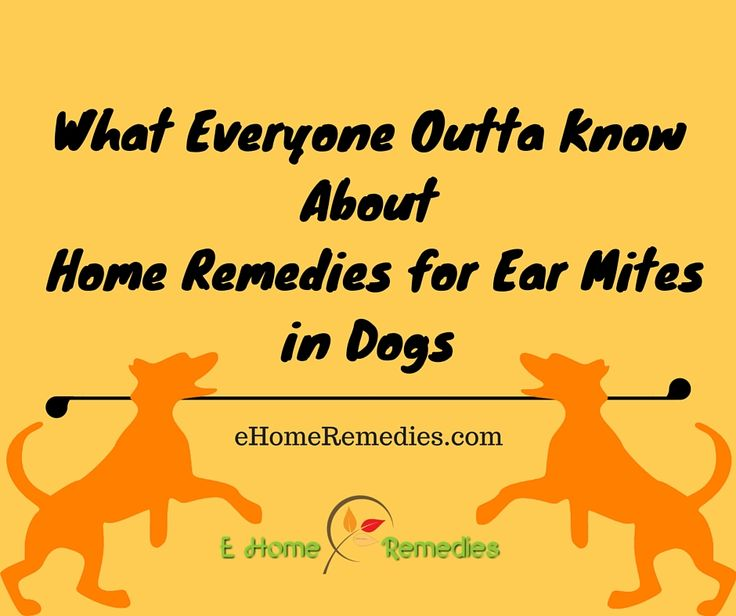 Ear Wash Dogs Home Remedy