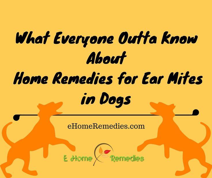 Best 20+ Dog Ear Mites Ideas On Pinterest