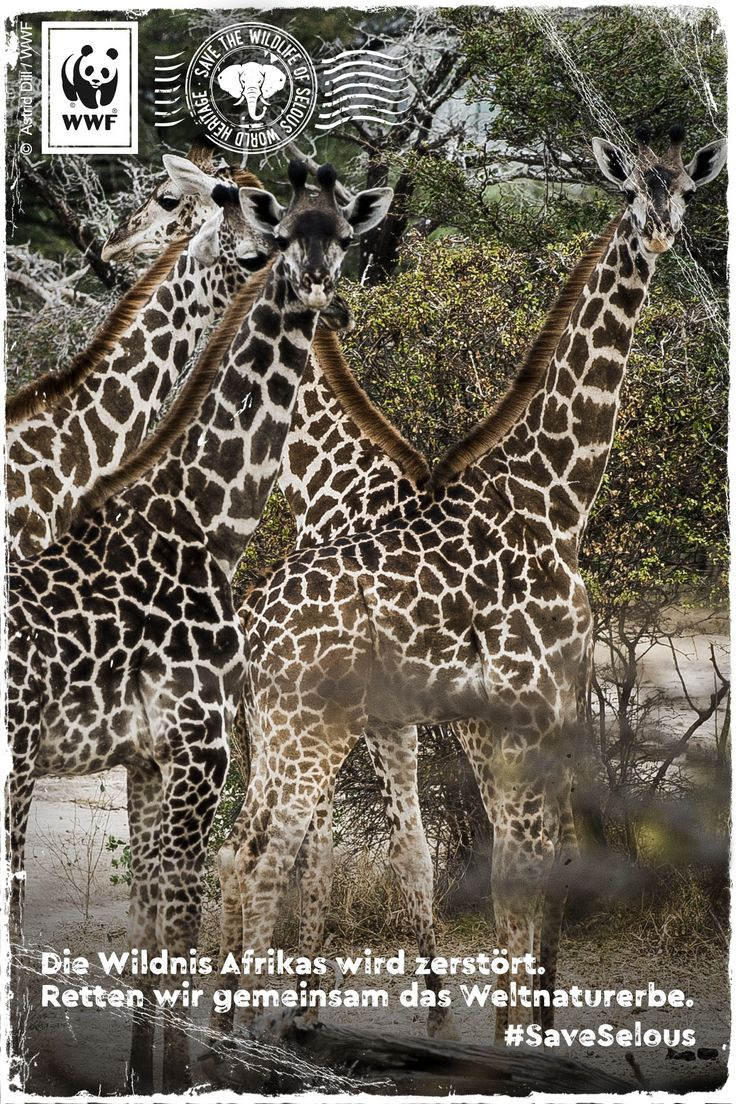 Unvorstellbar! Selous, Afrikas vergessenes Weltnaturerbe, ist in Gefahr! Wilderei und Industrie zerstören die unberührte Wildnis im Herzen Tansanias. Bitte unterschreibt die Petition: www.wwf.de/selous-retten #SaveSelous vía @WWF_Deutschland