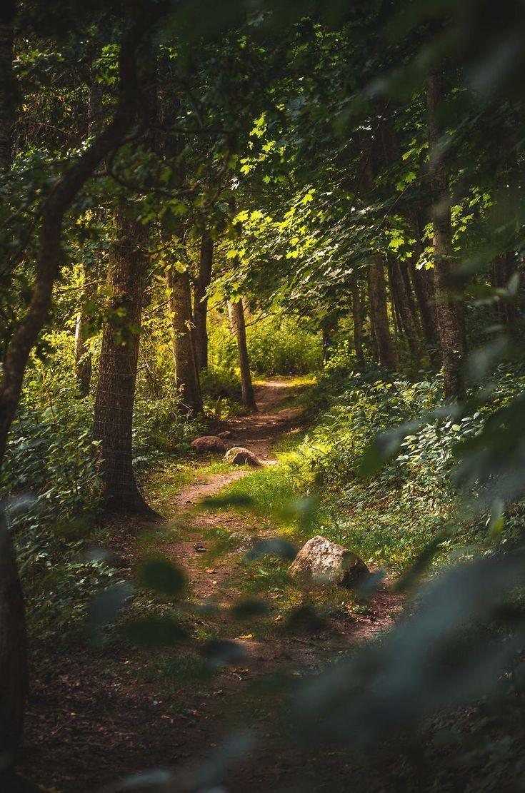 Forests Path Forests Waldweg Chemin Des Forets Camino Forestal Forests Aesthetic Forests Gre 2020 Goruntuler Ile Peyzaj Duzenlemesi Fikirleri Doga Fotografciligi Manzara