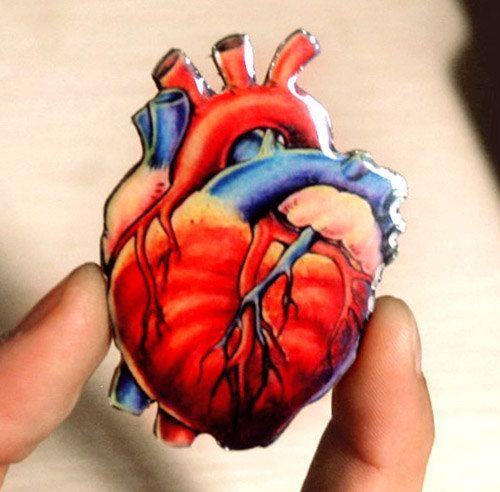 Best 25+ Anatomical Heart Drawing Ideas On Pinterest