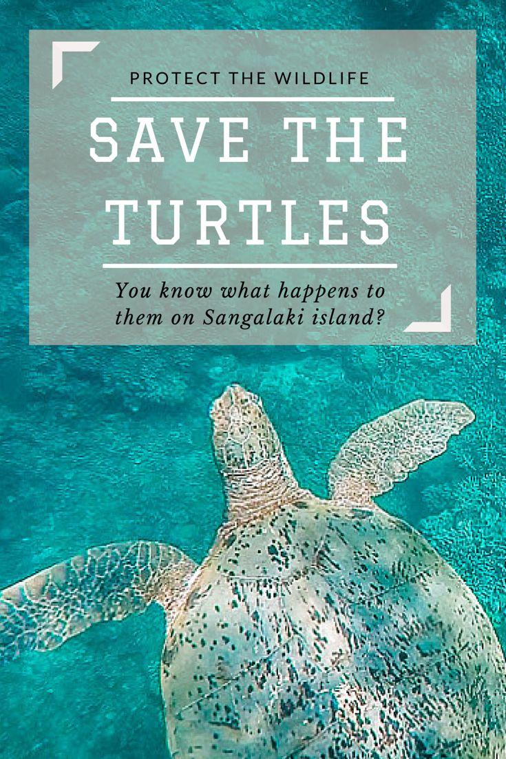 Don't go on Sangalaki island, save the turtles