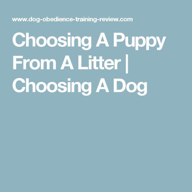 Choosing A Puppy From A Litter | Choosing A Dog
