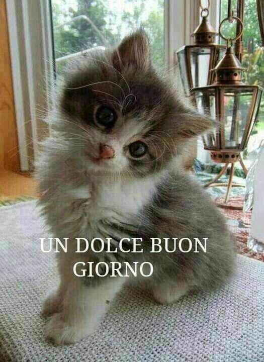 https://i.pinimg.com/736x/de/e5/f6/dee5f63d3c9fe9654b4c313cb30b849c--lions-kittens.jpg