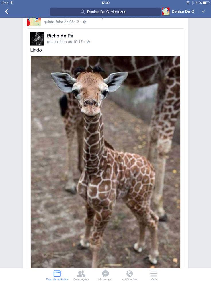 Girafinha