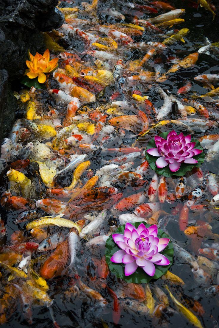 818 best koi pond backyard images on pinterest fish ponds