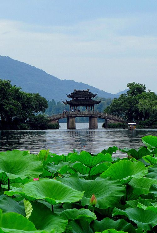 West Lake (Xī Hú, 西湖) in Hangzhou, Zhejiang Province, China. Lotus plants in the foreground.