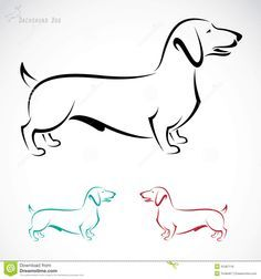 Image result for dachshund drawing study
