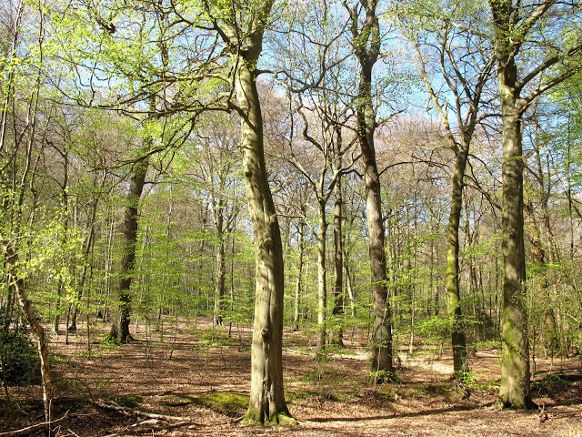 Burnham Beeches, near Slough, UK
