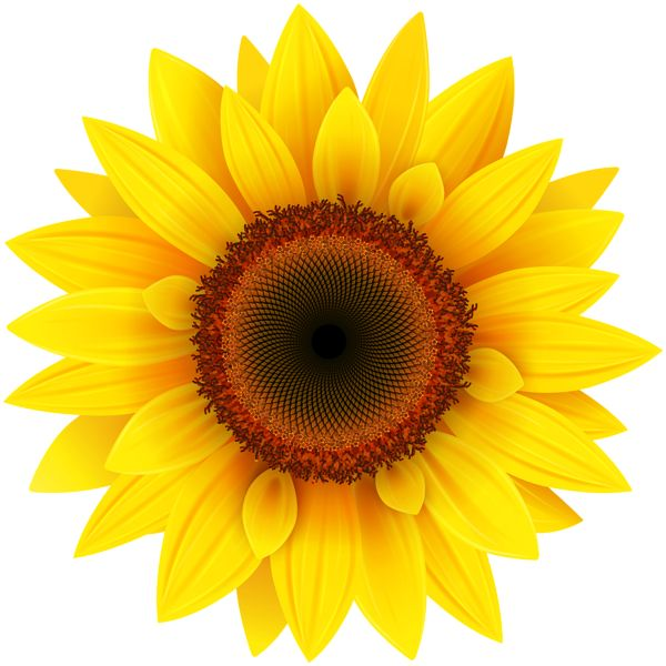 pin by Ка�е�ина on clipart pinterest sunflowers clip