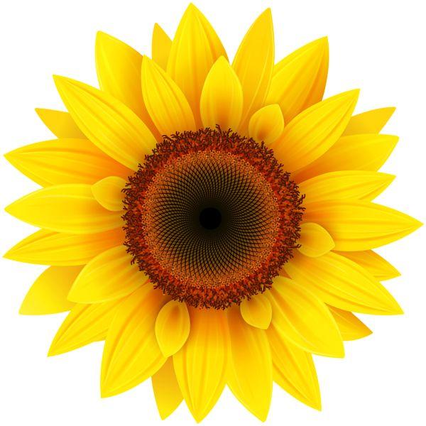 pin clipart sunflower