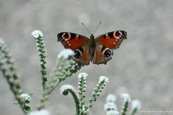 30 Beautiful Butterfly Pictures | Cuded