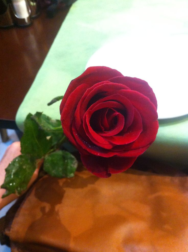 perfect spanish rose