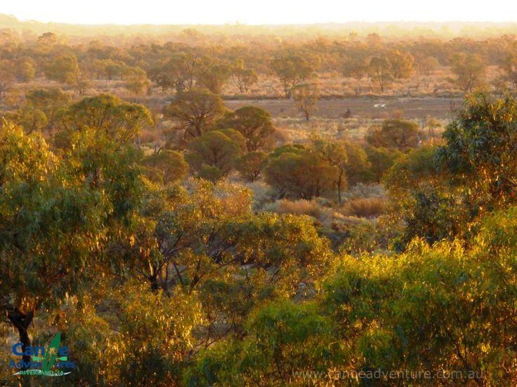 Golden evening light on the floodplains by the Murray River, Riverland,  Berri SA