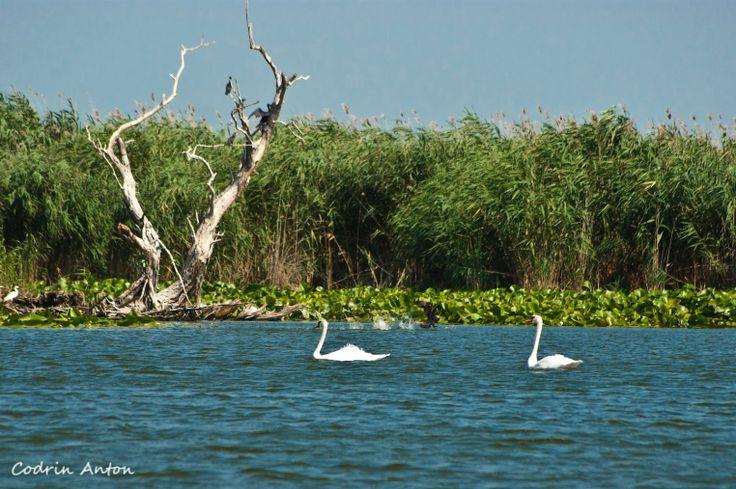 Danube Delta Romania Black Sea eastern Europe swans