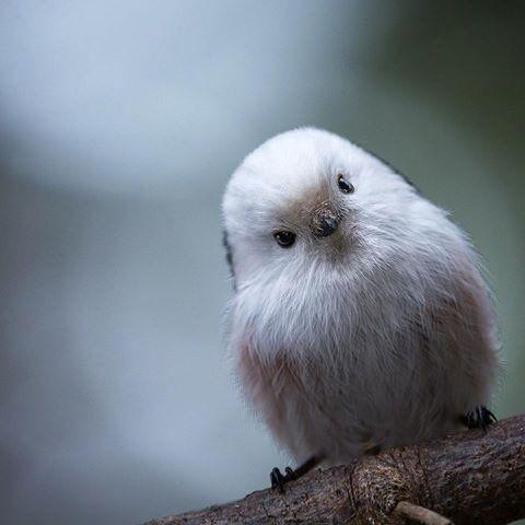 This Is The Korean Crow-Tit   Nature - Animals Birds   Birds