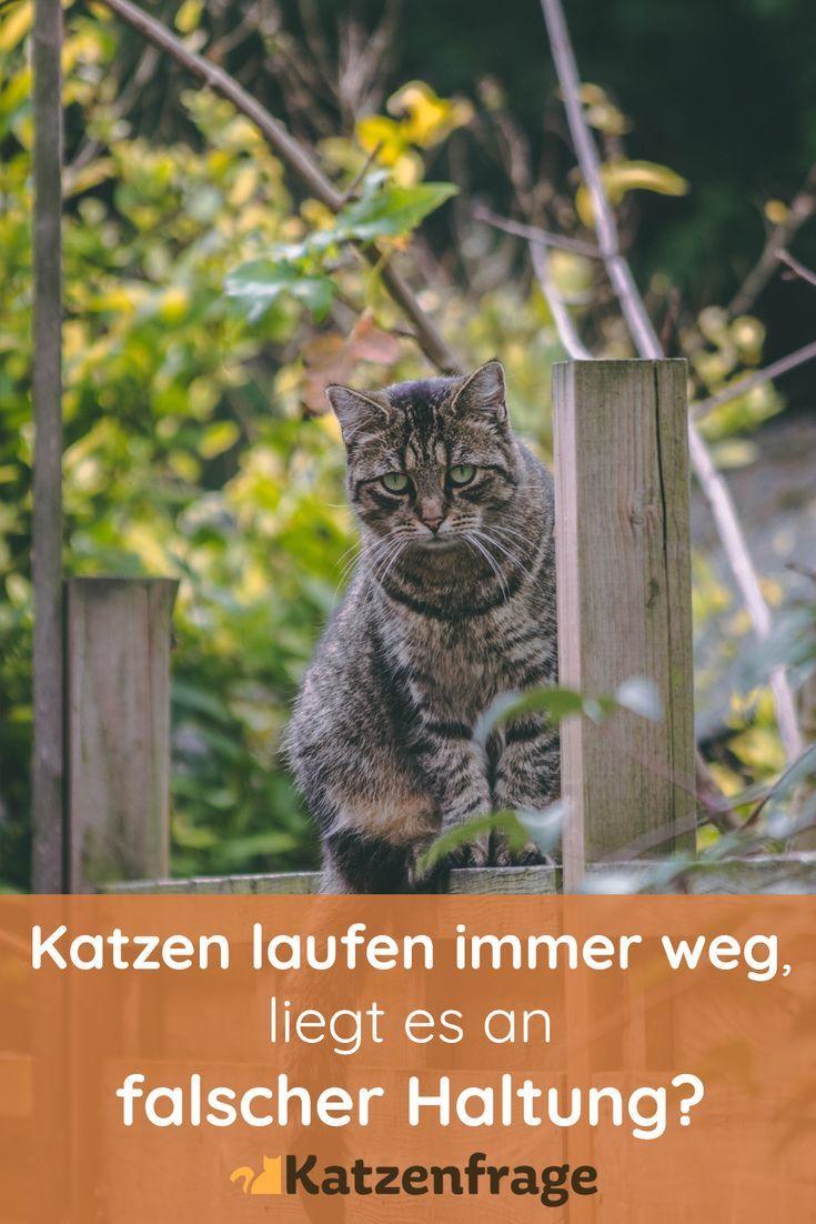 Ist Es Euch Schon Mehrmals Passiert Dass Eure Katzen Weggelaufen Sind Und Nicht Zuruckgekehrt Sind Obwohl Sie Genug Futter Katzenhaltung Katzen Katzen Fakten