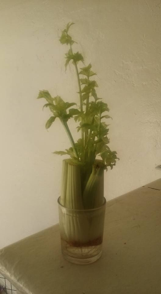 legume-plante-15.1