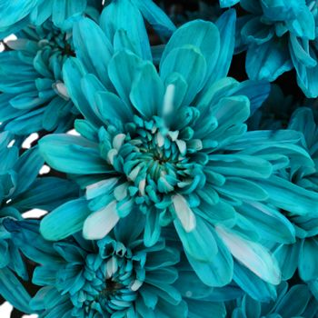 FiftyFlowers.com - Turquoise Blue Flowers Really like the blue and white combo on the flower!