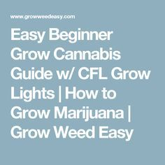 Easy Beginner Grow Cannabis Guide w/ CFL Grow Lights | How to Grow Marijuana | Grow Weed Easy