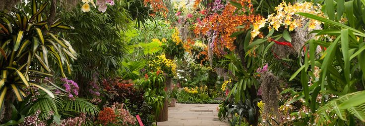New York Botanical Garden Enter a World of Spectacular Color 2/18 - 4/9 #flora/interpretations #flora/art #flowers #colorful http://www.nybg.org/exhibitions/2017/orchid-show/index.php