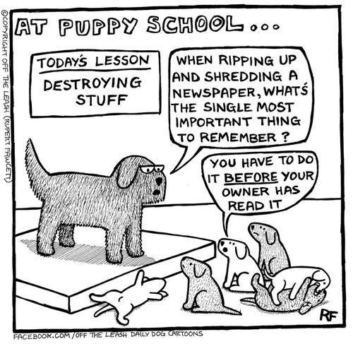 puppy school newspapers