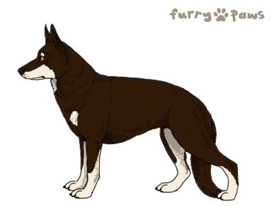 Furry Paws // WCT Kip's Justice Girl von Heike [3STM 21HH 1.577] *BoB*'s Kennel