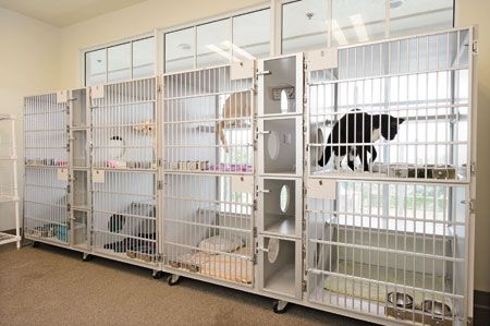 36 best images about boarding veterinary hospital design for A salon solution port st lucie