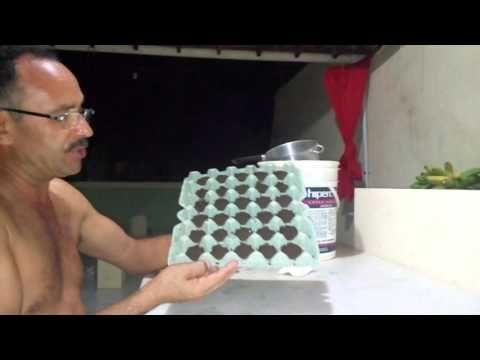 como plantar alface em casa - YouTube
