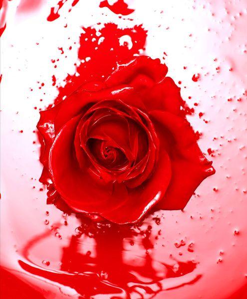 Photographer GRAEME DUDDRIDGE  Liquid Rose  ONE EYELAND