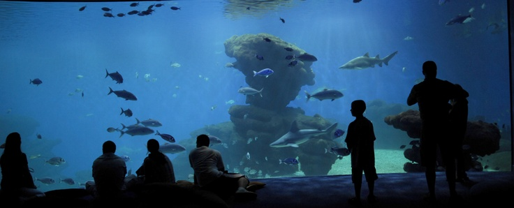 Experience the deepest Shark Tank in Europe, the Big Blue in Palma Aquarium. Relax on one of the Many bean sacks while the mighty sharks swim only few centimeters in front of you. ----- More Information: http://www.nofrills-excursions.com/excursions-tours-thingstodo/port-alcudia/excursion-palma-aquarium/