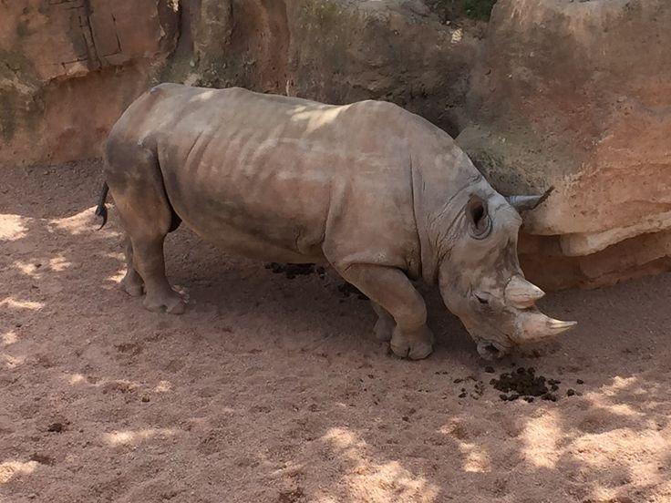 The Huge Rhino